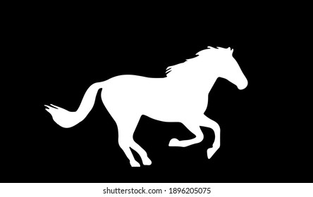 horse vector illustration isolated on background