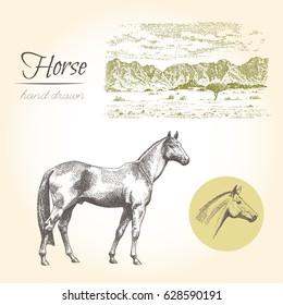 Horse. Vector vintage engraved illustration with landscape