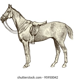 """Horse - vintage engraved illustration - """"Dictionnaire encyclopedique universel illustre"""" By Jules Trousset - 1891 Paris"""