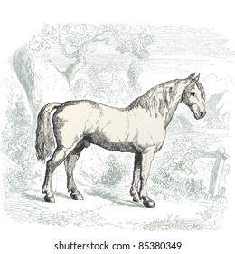 """Horse - vintage engraved illustration - """"Histoire naturelle"""" by Buffon and Lacépède published in 1881 France"""