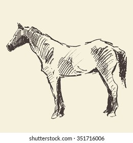 Horse vintage engraved illustration, retro style, hand drawn