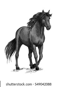 Horse walking in slow gait. Gray wild mustang pacing along road. Arabian equine mare stands with half lifted hoof. Vector sketch portrait