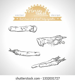 Horseradish. Hand drawn collection of vector sketch detailed fresh vegetables. Isolated