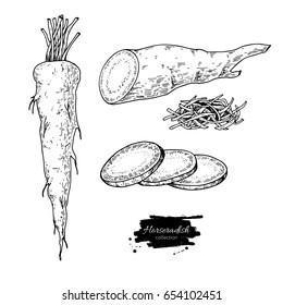 Horseradish hand drawn vector illustration. Isolated Vegetable engraved style object. Detailed vegetarian food drawing. Farm market product. Great for menu, label, icon