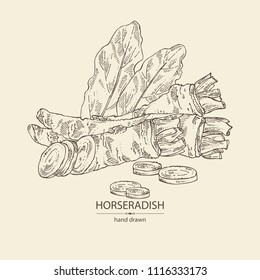 Horseradish: horseradish root, leaves and a piece of horseradish root. Vector hand drawn illustration.