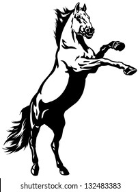 horse,rearing mustang,black and white picture