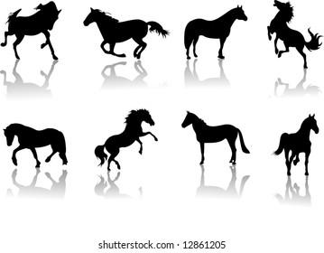 A lot of horses