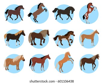 Horses colourful collection in blue circles on white. Vector poster of various types of black, brown, with and without spots steeds with thick manes standing on four and two legs in flat style
