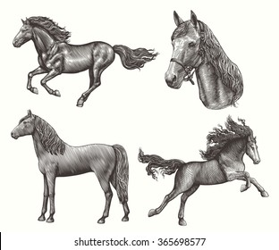 Horses. Design set. Hand drawn engraving. Vector vintage illustration. Isolated on color background. 8 EPS