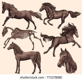 Horses. Design set. Hand drawn engraving. Vector vintage illustration. Isolated on light background. 8 EPS