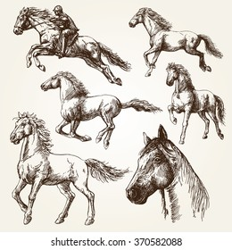 Horses. Hand drawn set.