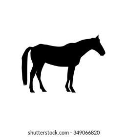 Horses Icon.