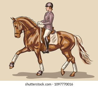 A horsewoman riding on a horse. Equestrian sport, dressage.