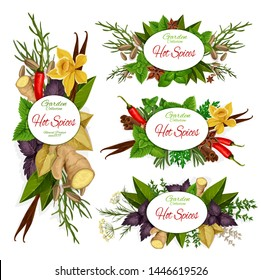 Hot spices vector icons with green herbs, vegetable seasonings and food condiments. Chilli pepper, vanilla pod and cinnamon stick, mint, basil and ginger root, star anise, dill, thyme and bay leaves