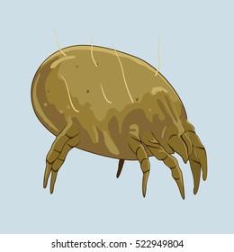 House dust mite - microscopic bugs. Vector illustration