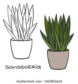 House plant in a planter. Vector outline illustration drawings of coloured indoor plant in a flowerpot isolated on a white background with a handwriting caption. Sansevieria, Snake Plant.
