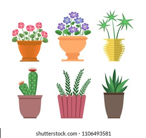House plants types collection, set of cactus, haworthia and chionodoxa in pots and vases, decor houseplants vector illustration isolated on white