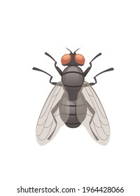 Housefly flying insect cartoon fly design vector illustration on white background top view