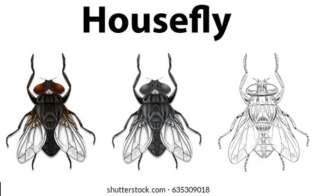 Housefly in three styles on white