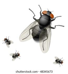 Housefly. Vector illustration.
