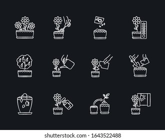 Houseplant care chalk white icons set on black background. Indoor gardening steps. Repotting, spraying plants. Planting flower seeds. Watering, fertilizing. Isolated vector chalkboard illustrations
