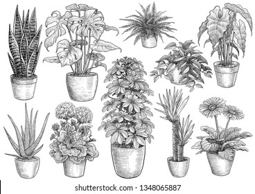 Houseplant collection, illustration, drawing, engraving, ink, line art, vector