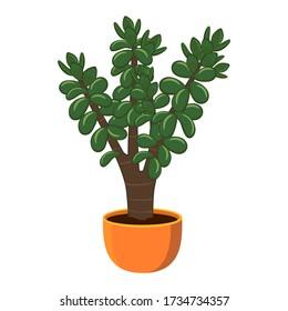 Häuspflanze Crassula ovata in einem Topf isoliert auf weißem Hintergrund Vektorbild