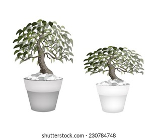 Houseplant, Illustration of Two Beautiful Bonsai Tree or Small Plants in Flowerpots for Garden Decoration.