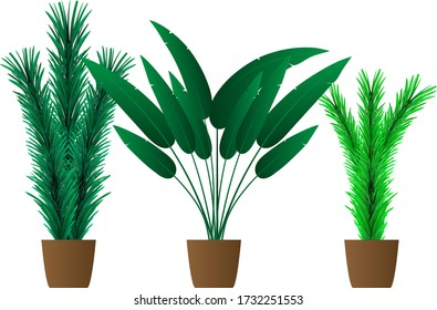 Houseplant Tree Elements for design indoor house, room or office interior in pot vector set.
