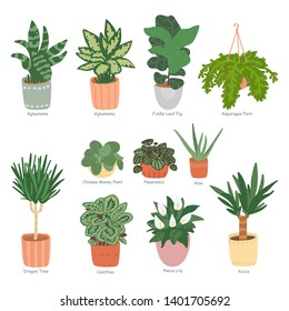 Houseplants collection isolated on white background. Home garden. Vector illustration in the style of hand-drawn flat