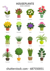 Houseplants collection. Vector illustration of most popular houseplants and flowers in multi-colored pots, such as Orchid, Calla Lily, Gardenia, Violet, Aloe and Cactus. Isolated on white.