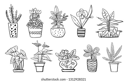 Houseplants in flowerpots. Vector hand drawn outline black and white sketch illustration isolated on white background