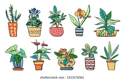 Houseplants in flowerpots. Vector hand drawn outline color sketch illustration isolated on white background