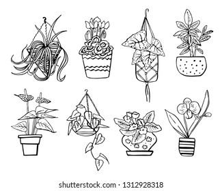 Houseplants in hanging flowerpots and pots. Vector hand drawn outline black and white sketch illustration isolated on white background