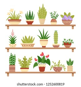 Houseplants on shelf. Flower in pot, potted houseplant and plant pots. Home plants on shelves. Garden decoration flower houseplants pots flat isolated icons vector illustration set