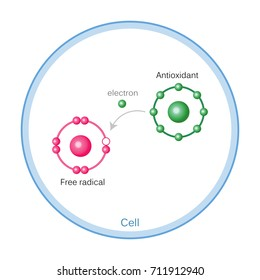 How Antioxidants Work On Free Radicals Damage. Oxidation stress. Vector illustration flat design