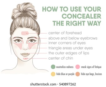 How to apply your concealer the right way infographic chart. Vector illustration with makeup and beauty tips. Face zones for concealer or highlighter correction. How to choose the color of concealer.
