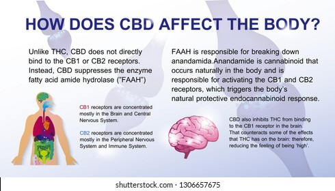 how does cbd affect the brain and endocannabinoid system cb1, cb2 bennefit in human