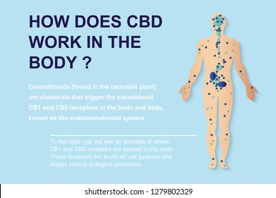 how does cbd work in the body,human endocannabinoid system effect on body,vector on background.