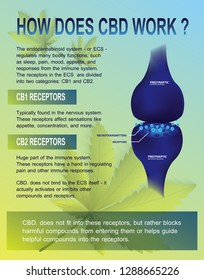 how does cbd work and human endocannabinoid system is CB1,CB2 and   affects the human body and brain.