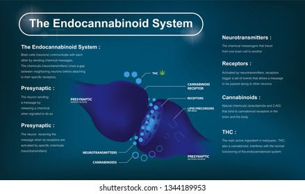 how does cbd work and human endocannabinoid system and   affects the human body and brain.