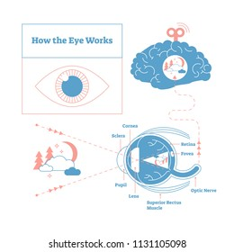 How the eye works medical scheme poster, elegant and minimal vector illustration, eye - brain labeled structure diagram. Stylized and artistic medical design poster.Health care educational infographic