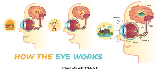 How the eye works. Three different variations.  Basic graphic elements for building educational material about the eyes.