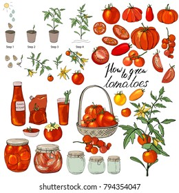 How to grow tomatoes. Isolated fresh vegetables, different sorts. Food made of tomatoes