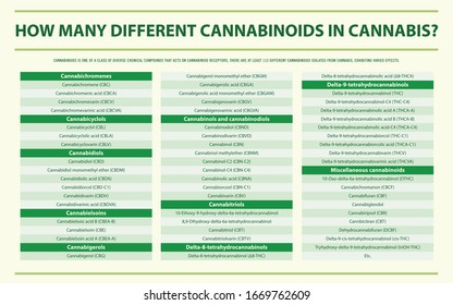 How Many Different Cannabinoids in Cannabis horizontal infographic illustration about cannabis as herbal alternative medicine and chemical therapy, healthcare and medical science vector.