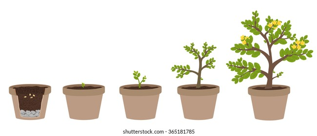 Illustration Growing Stages Images, Stock Photos & Vectors