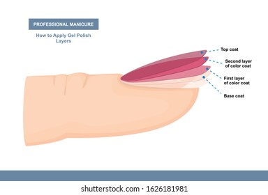 How to Properly Apply Gel Polish. Layers. Professional Manicure Tutorial. Vector illustration