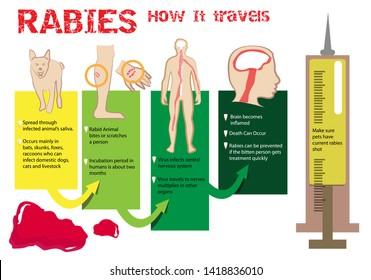 How Rabies travel concept infographics. Editable Clip Art.