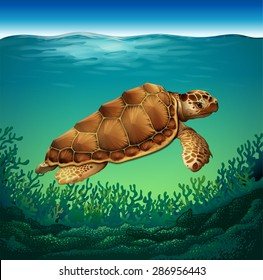 Huge brown turtle swimming in the sea