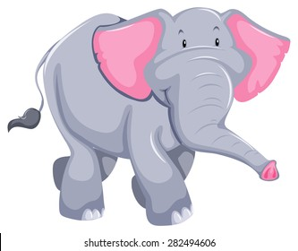 Huge elephant standing on white background